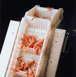 food quality conveyor for prawns
